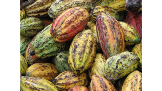 Hershey To Source Enough Certified, Sustainable Cocoa To Produce 4 Of Its Chocolate Brands In 2016