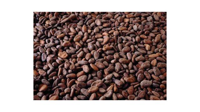 cocoa-beans_10734677.psd