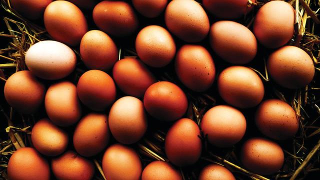 eggs_10797232.psd