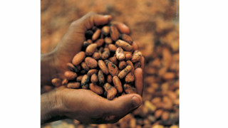 Ebola Outbreak Has Had Little Effect On African Cocoa Supply