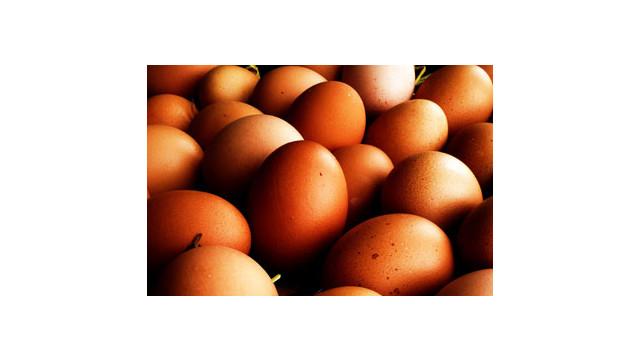 eggs_10861905.psd
